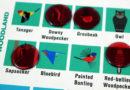 Charlie Harper's Spot The Birds board game